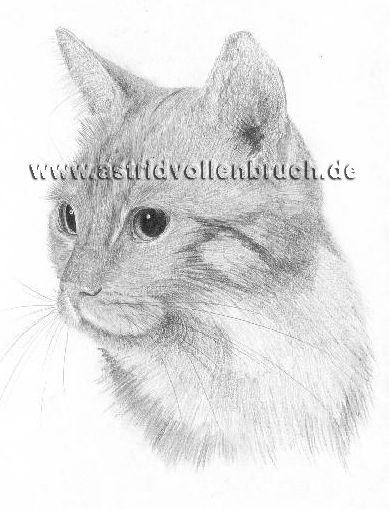 Katze02