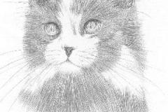 Katze19920227